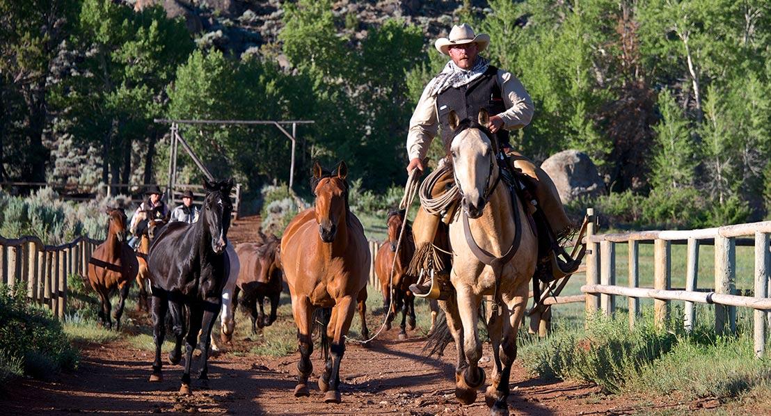Gary-Kunis,-horse-roundup_1_web