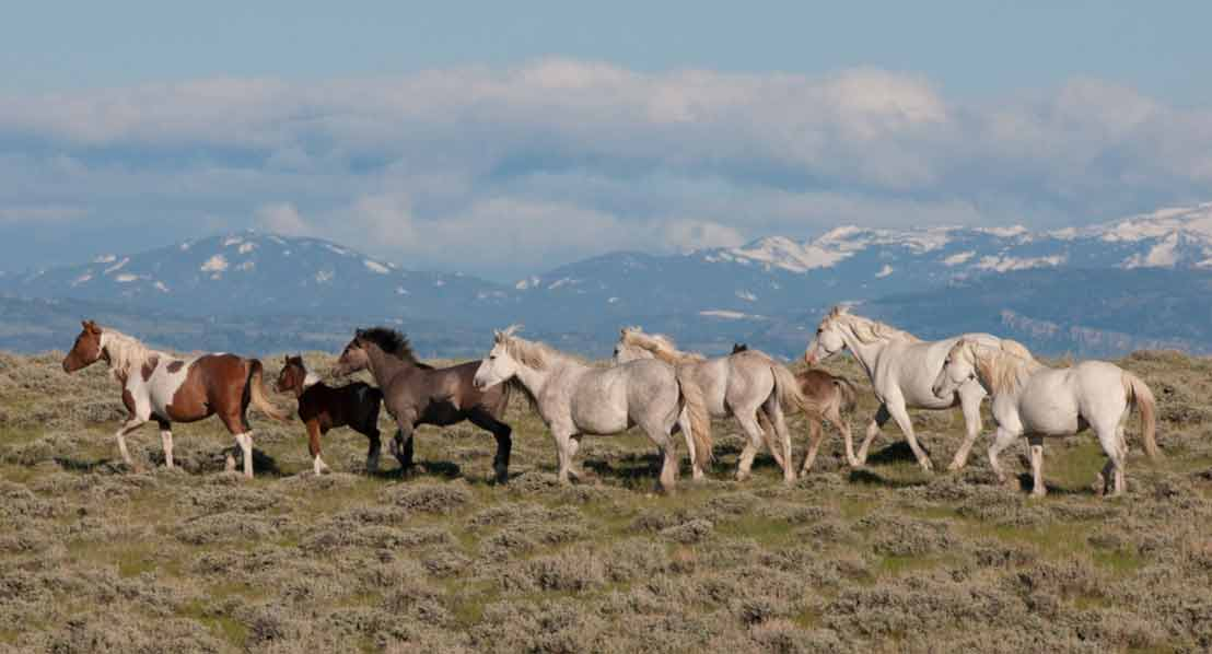 Wild Horses Wind River Country