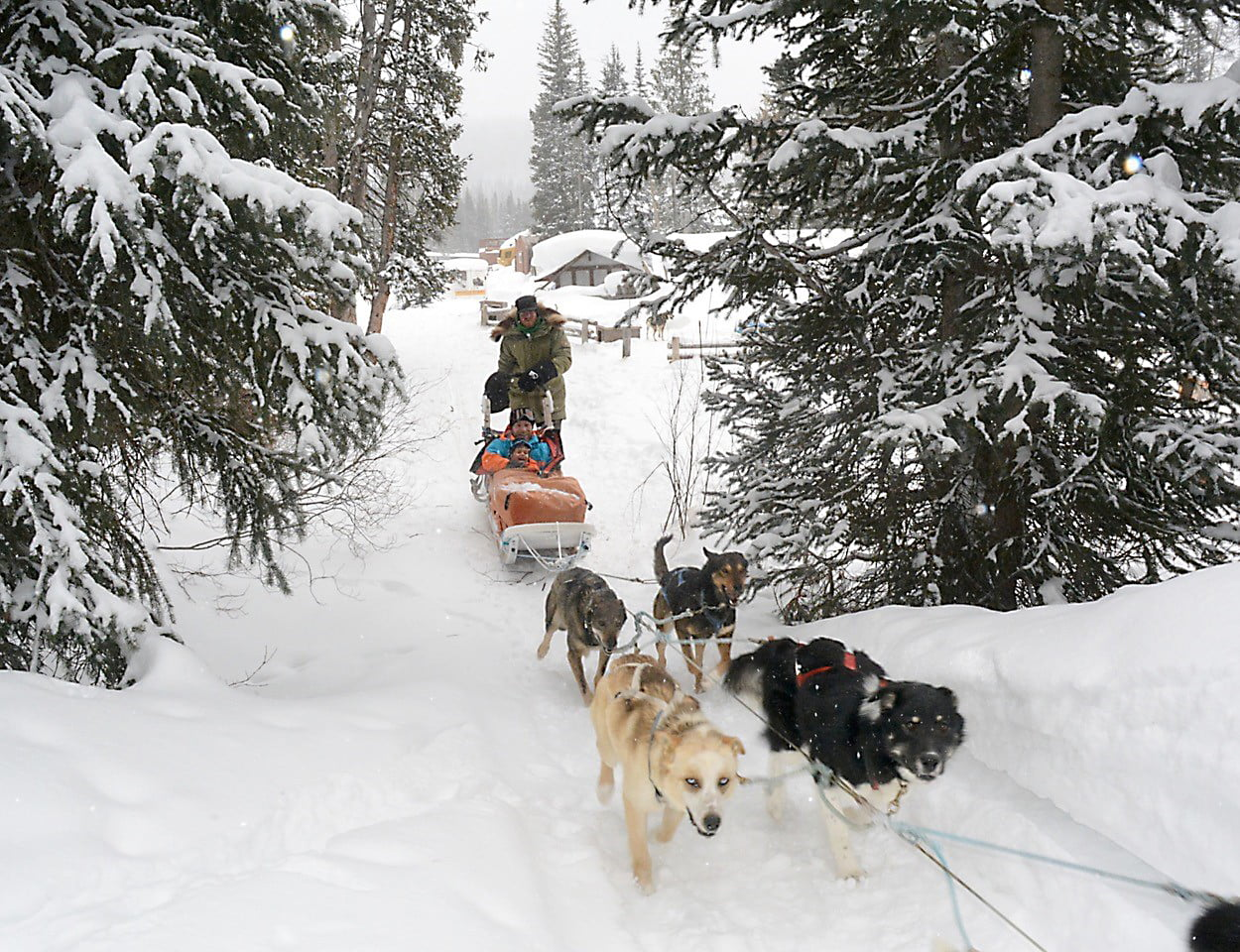 Dog Sledding - Wind River Country