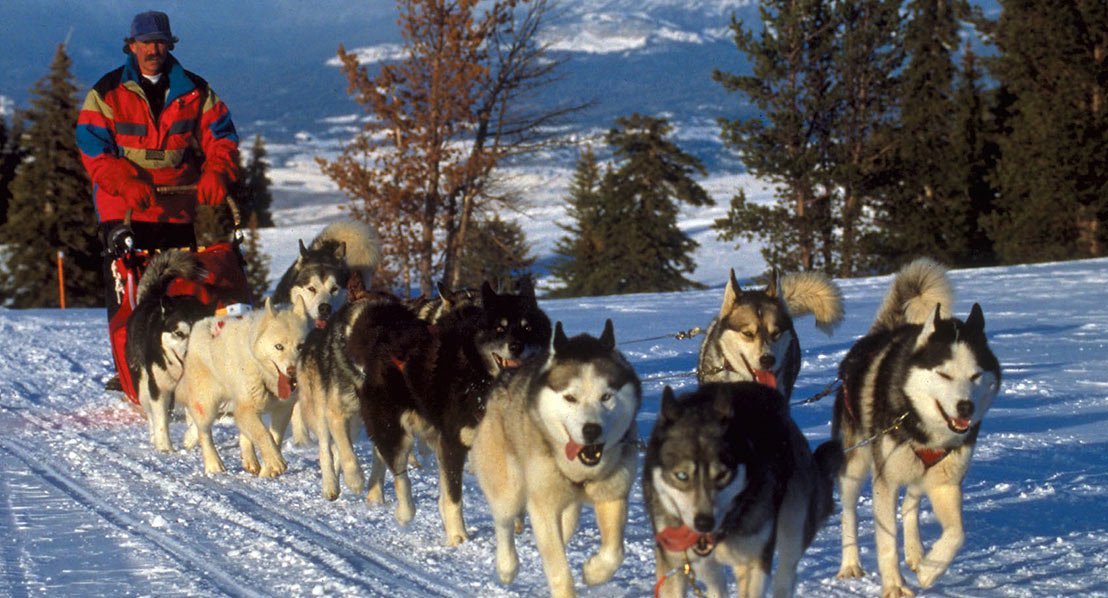 A musher and his team on the trail