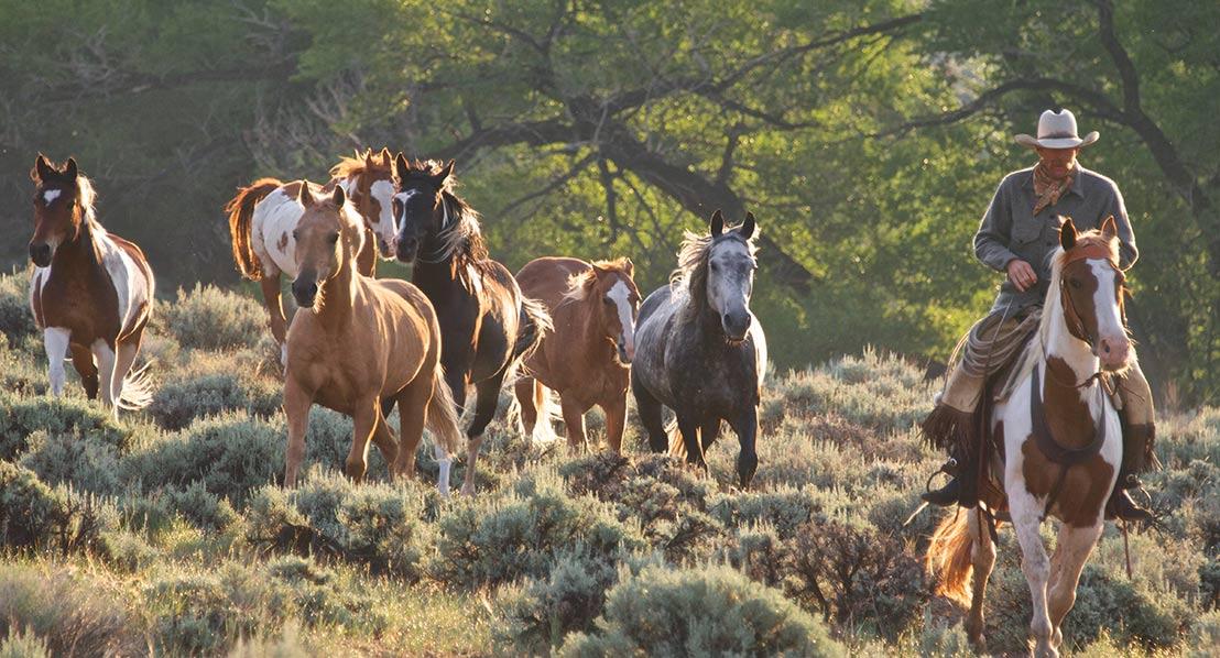 Gary-Kunis,-horse-roundup_2_web