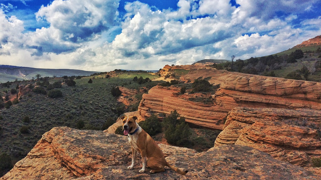 Johnny Behind the Rocks. Photo:  Libby Gadbois