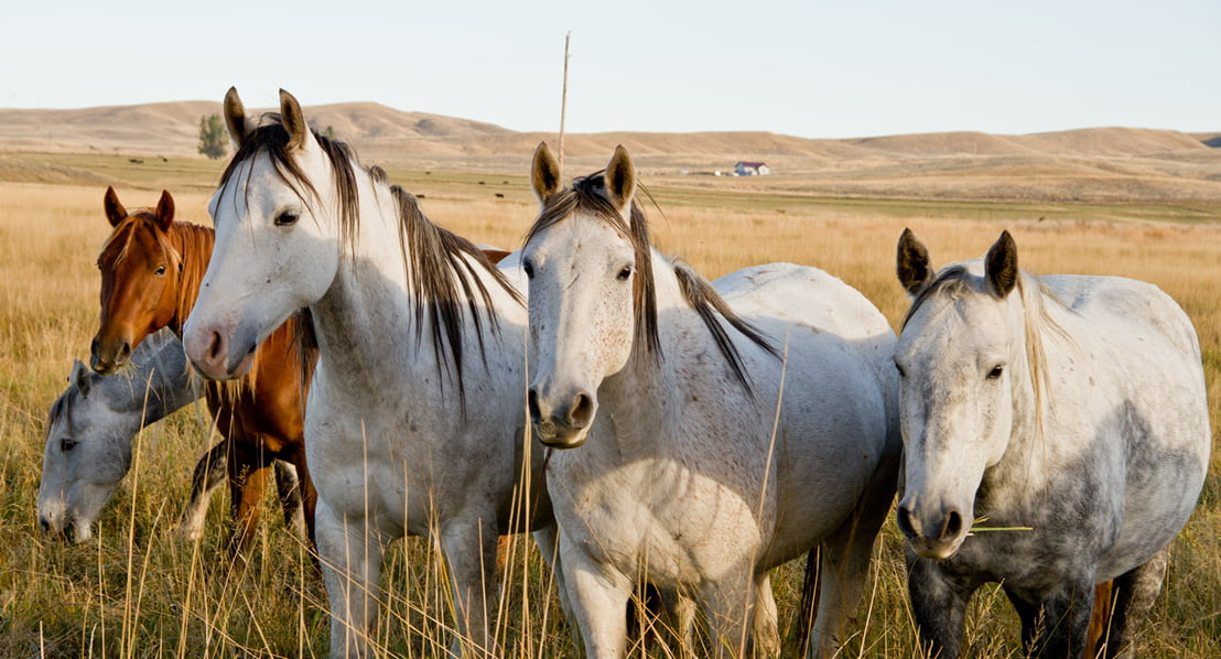 Wild Horse Sanctuary Photo: MelissaJHemken