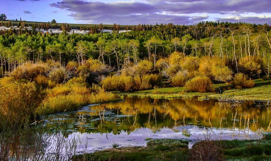 Twin Creek, Timothy Rockhold