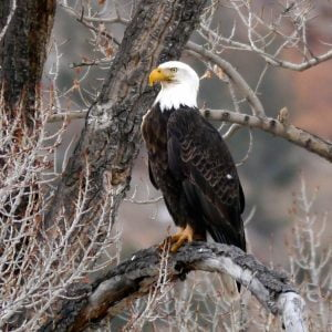 The Wyoming Wildlife Game: Tips for road trips with kids