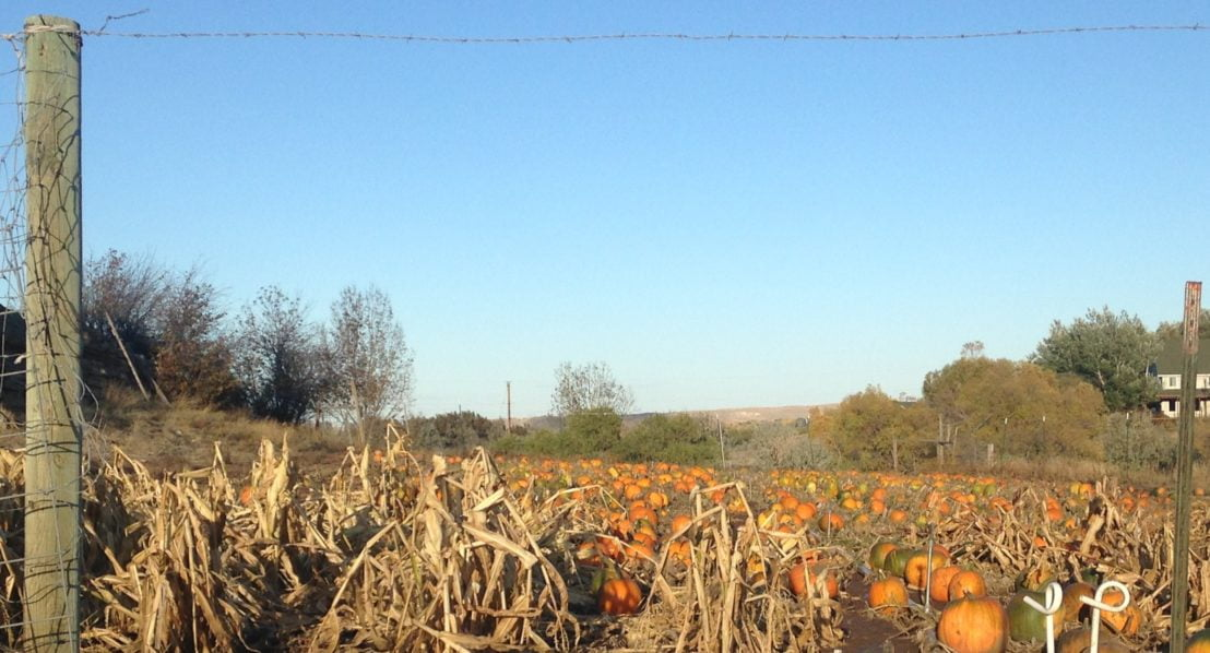 Squaw Creek Pumpkin Patch view from gate