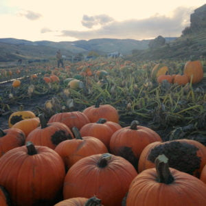 A view of the Wind River Mountains with pumpkins.