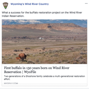 Facebook post about the reintroduction of bison on the Wind River Indian Reservation