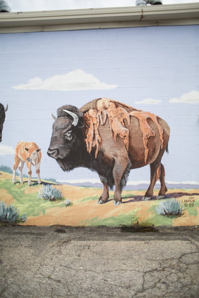 Bison painted on a building in Lander. Kelsey Bang photo